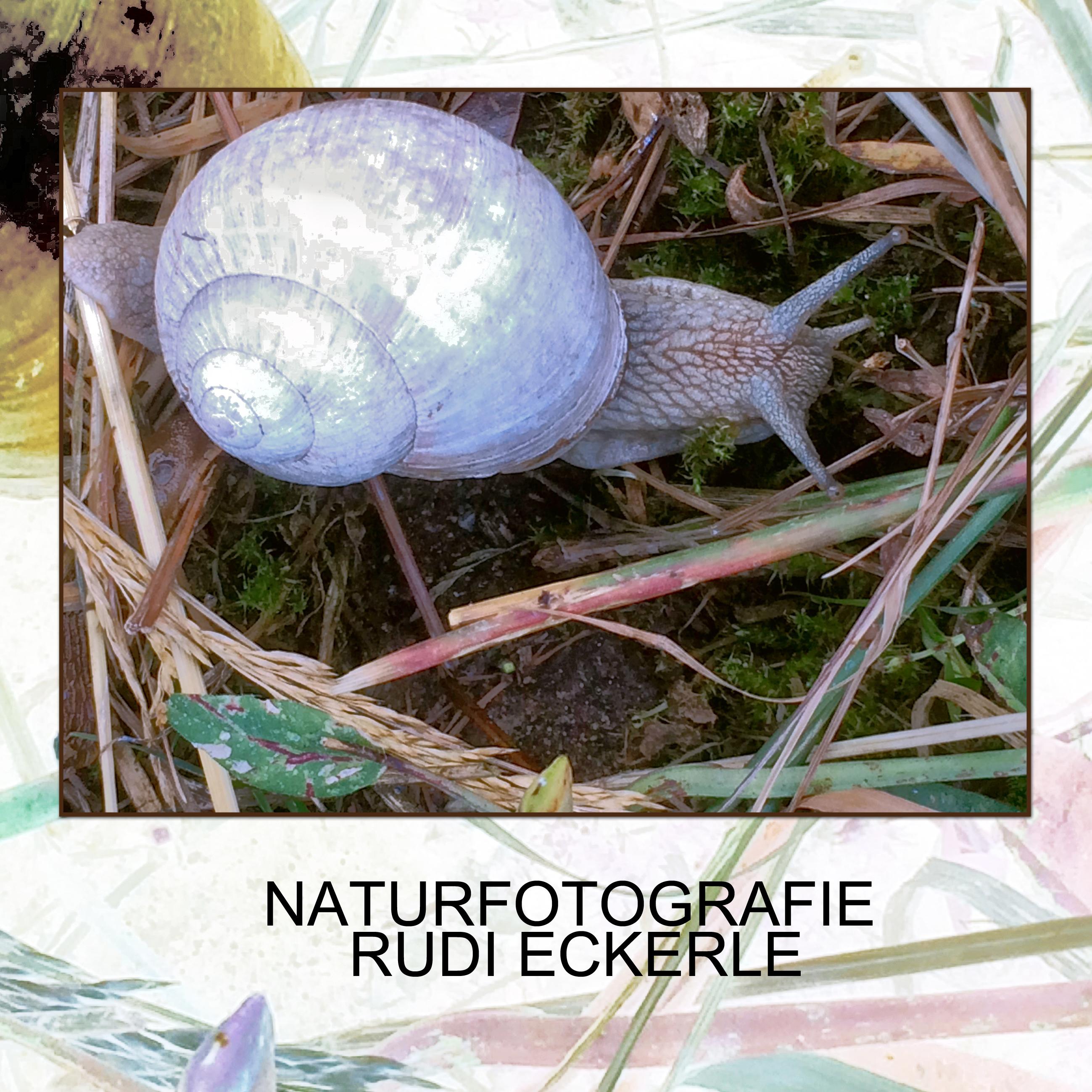 Titel Naturfotogafie