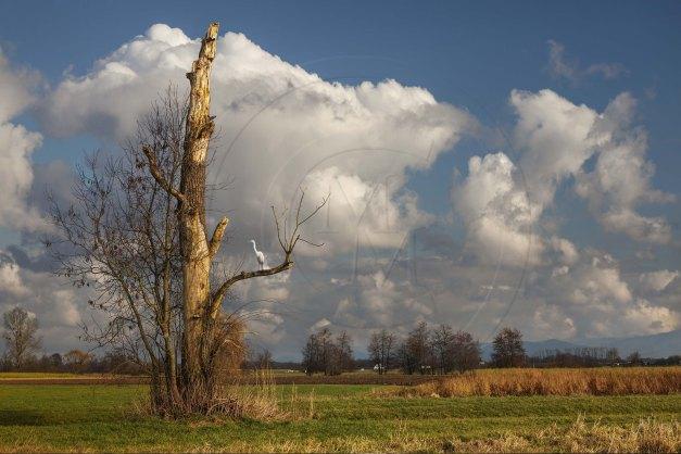 Deutschland Baden Württemberg Ortenau Alter Baum bei Achern